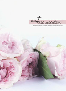 Fall-Collection-cover